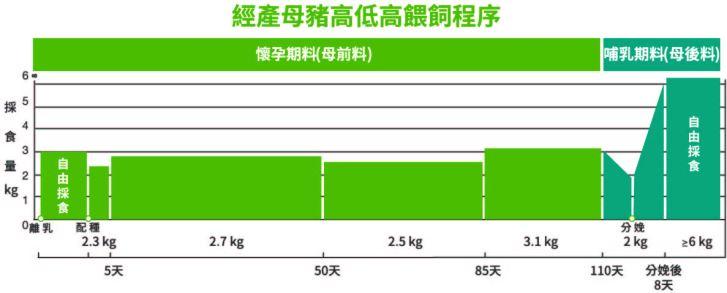 經產母豬高低高餵飼程序_修改圖-01