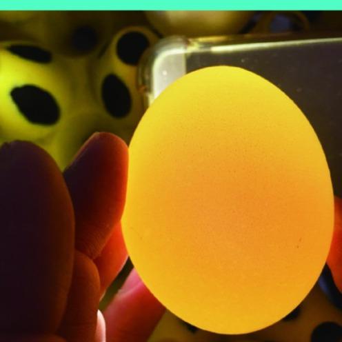 蛋殼緻密度好